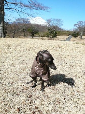 富士山びゅ〜