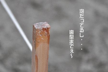 うめてんの歯型.jpg