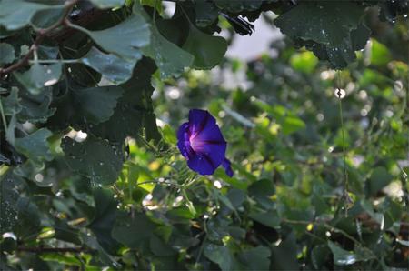 大鹿村 お花